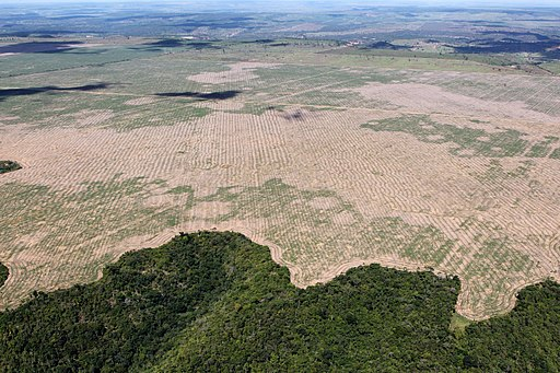 Deforestation of the Brazilian rainforest